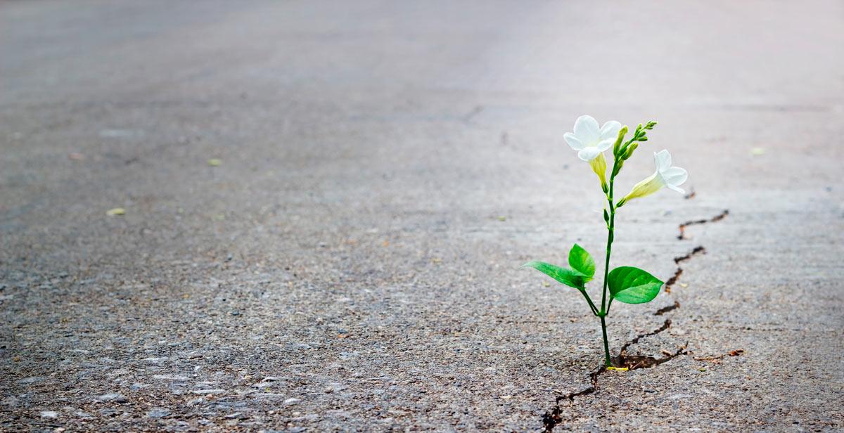 fleur-qui-pousse